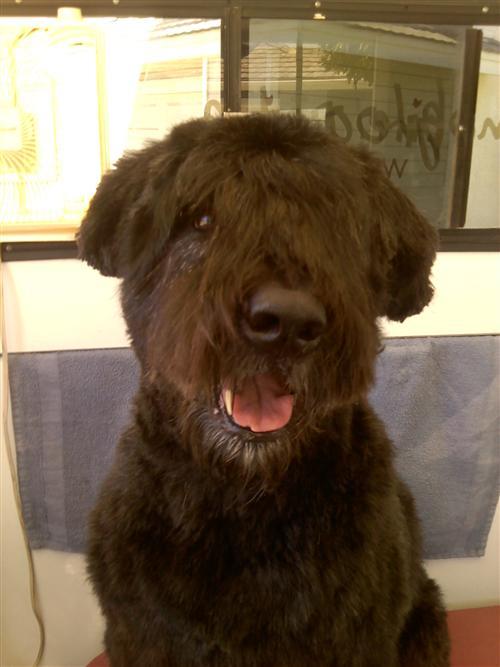 Abby-Justina-dog-grooming-La-Jolla-92037