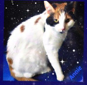 Annie-cat-grooming-Tierrasanta-92124-Justina