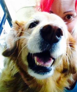 Bently-Ariel-pet-grooming-La-Jolla-92037