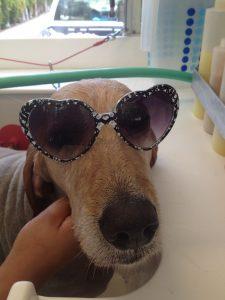 Duke-pet-grooming-Carmel-Valley-92130