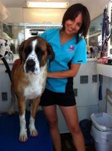 San-Diego-mobile-pet-grooming