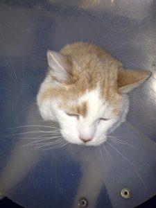 Simon-cat-grooming-Carmel-Valley-92130