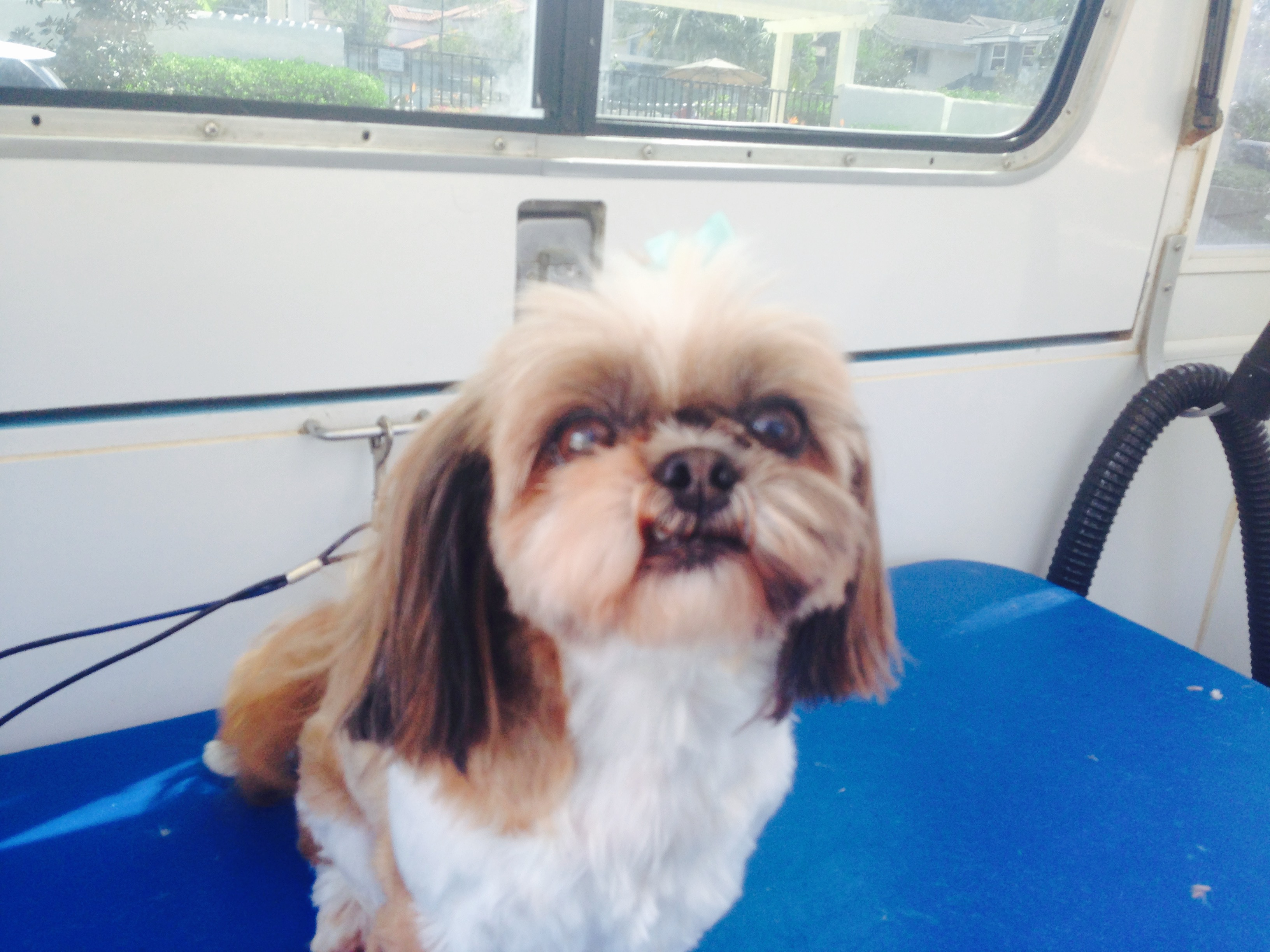 mobile-dog-grooming-san-diego