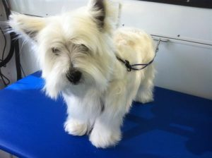 Tundra-pet-grooming-92109-Pacific-Beach