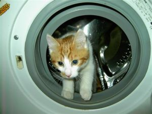 cat-washing-machine