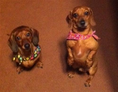 diesel-molly-carolyn-dog-grooming-Carmel-Valley-92130