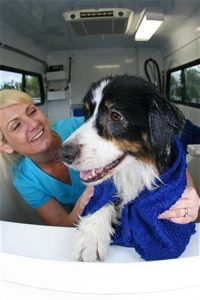dog-grooming-scripps-ranch-92131