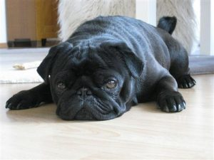 dog-lying-down