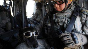 dog-of-war