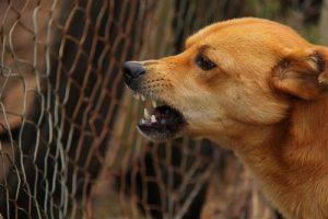 dog-ready-to-bite