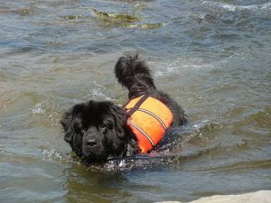 dog-with-life-vest