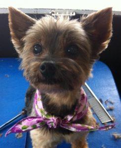 neesha-carolyn-dog-grooming-Carmel-Valley-92130