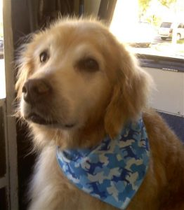 otter-shelly-dog-grooming-Carmel-Valley-92130