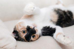 playful-cat