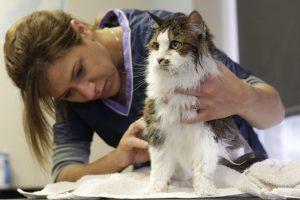 vet-with-cat