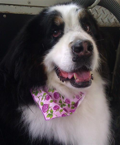 Bailey-Michelle-dog-grooming-Carmel-Valley-92130